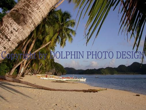 Copyright by DOLPHIN PHOTO DESIGN